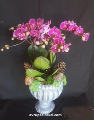 Orkide 19