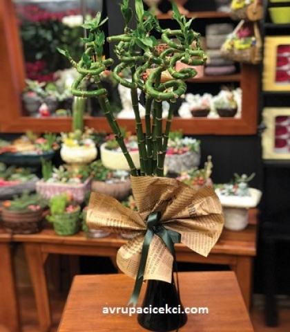 Şans Bambu Çiçeği