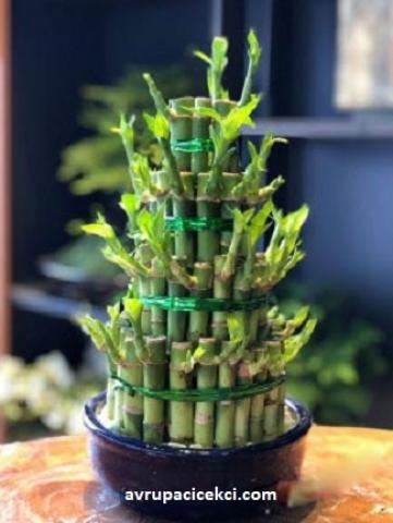 Grup Bambu
