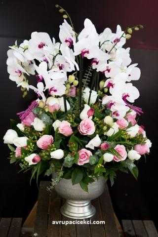 Orkide 35