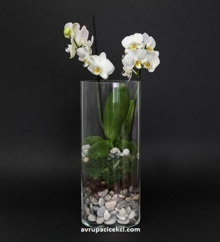 Orkide 30