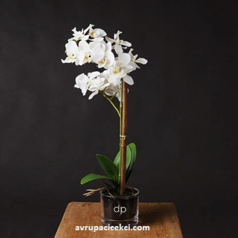 Orkide 27