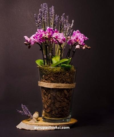 Orkide 26