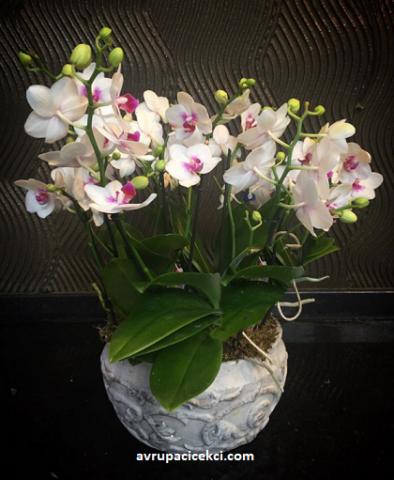 Orkide 02