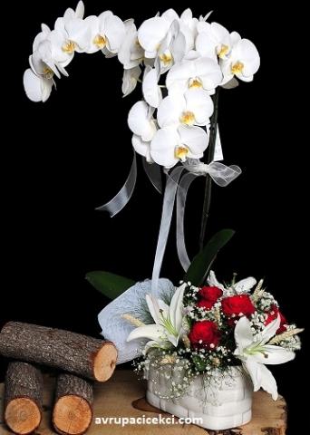Orkide 23