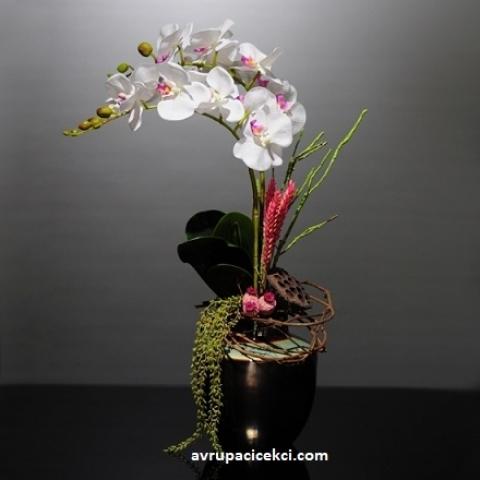 Orkide 11