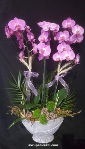 Orkide 17