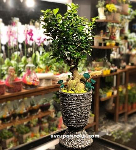 Mini Bahçeli Bonsai