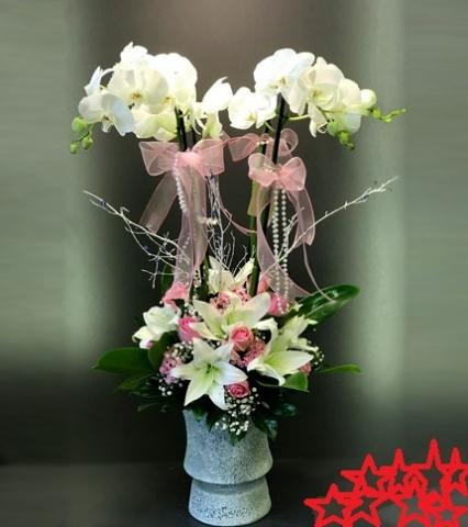 Orkide 28