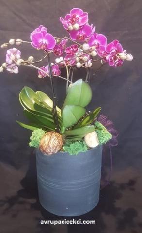 Orkide 20