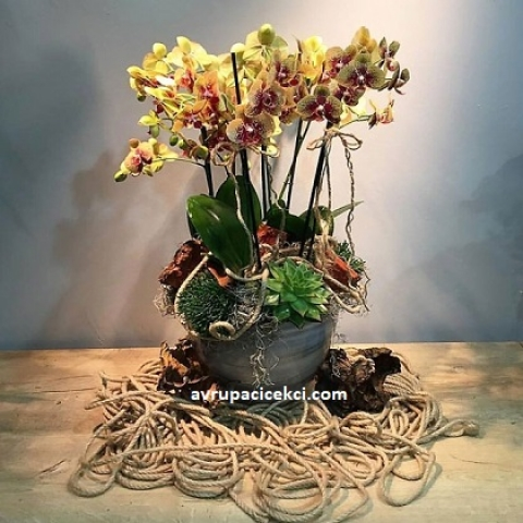 Orkide 03