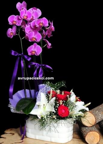 Orkide 29