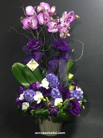 Orkide 25